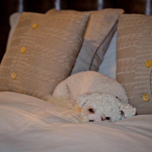 bed dressings with family pet